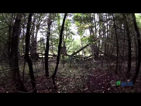 OFF GRID FAMILY #102 – A walk down the new driveway path at the off grid property