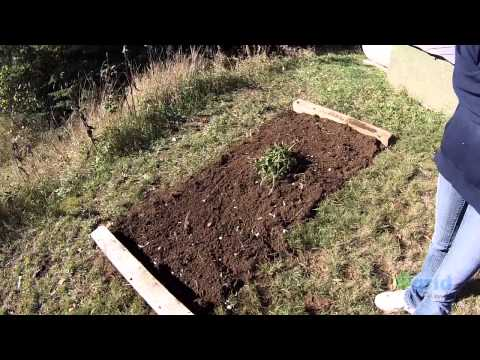 OFF GRID FAMILY #104 – Winterize the homestead and get the garlic planted