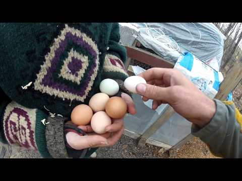 Egg-A-Day™ Series 4-22-2015